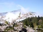 pic diambil bulan april di gunung Ali Taiwan